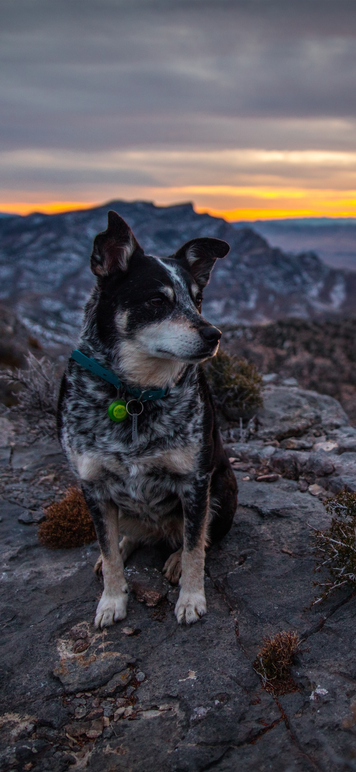 Dog Sit On Ground Mountains Sunset 1242x2688 Iphone Xs Max
