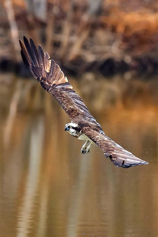 iPhone Wallpaper Eagle flight, wings, pond