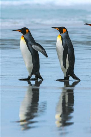 iPhone Wallpaper Emperor penguin, team, walking, sea