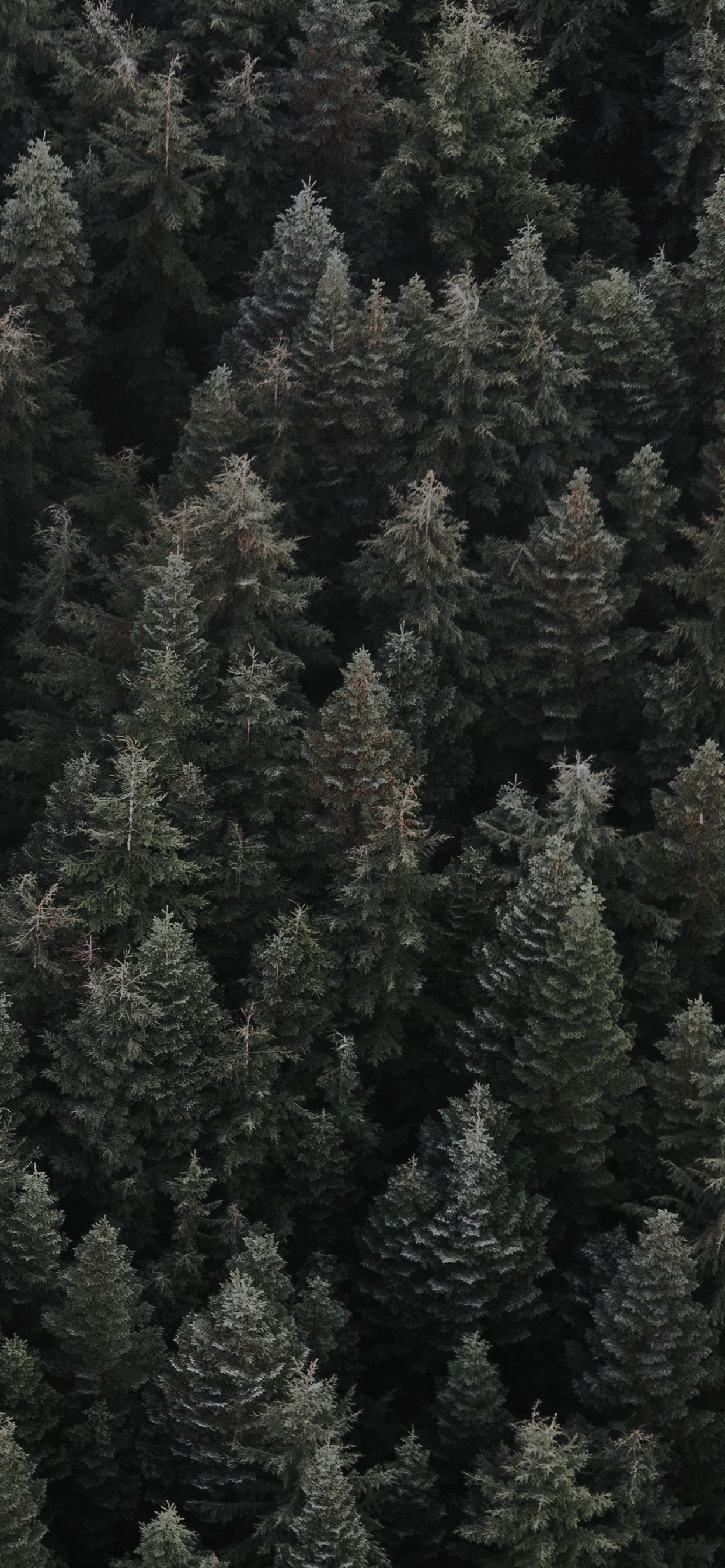 Forest Top View Darkness 1242x2688 Iphone 11 Pro Xs Max Wallpaper Background Picture Image