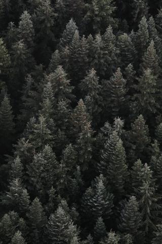 iPhone Обои Вид леса, темнота