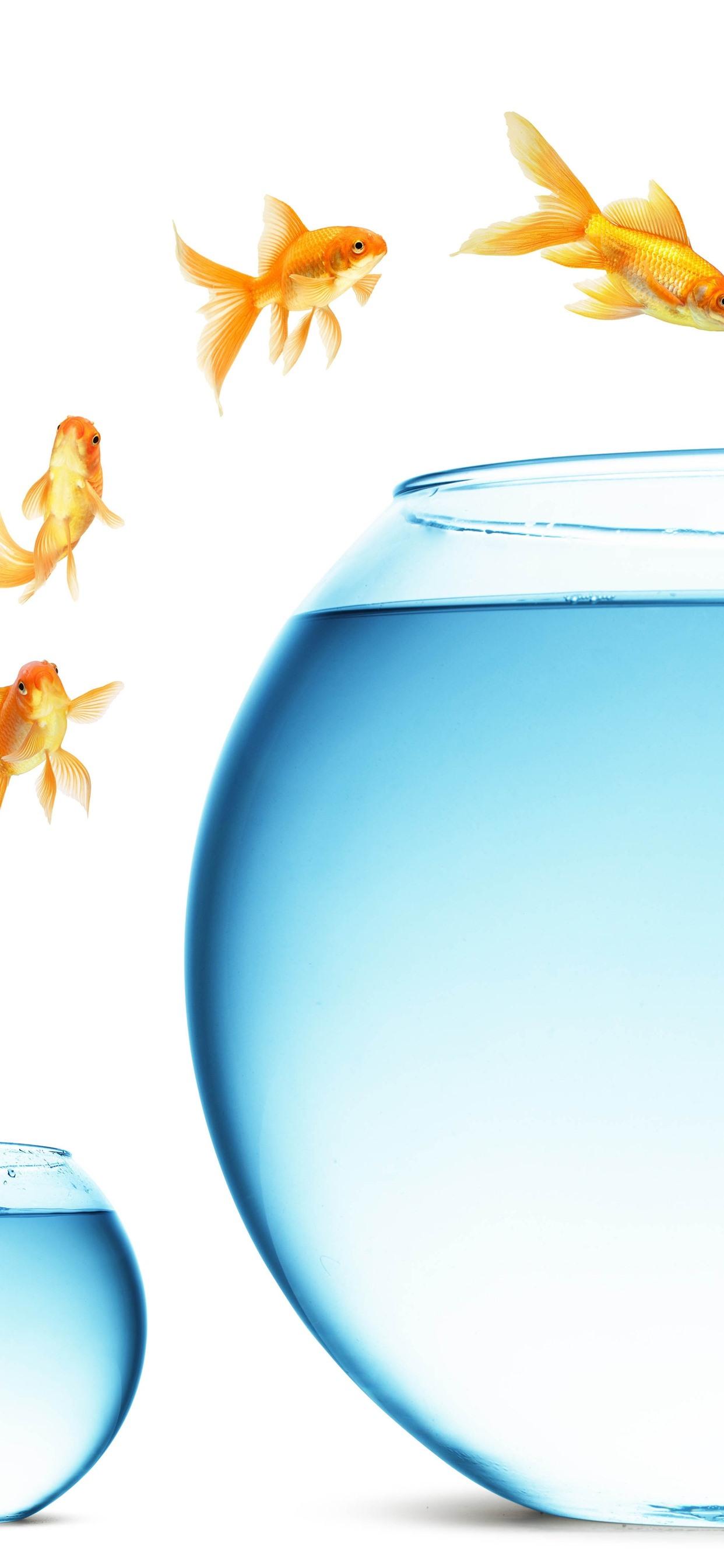 金魚のジャンプ 大きくて小さいガラスの魚の水槽 水 1242x2688