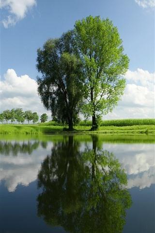 iPhone Wallpaper Green summer, trees, grass, pond, sky, clouds