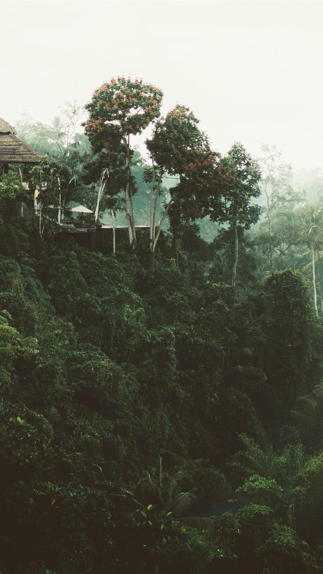Jungle, trees, house 1242x2688 iPhone ...