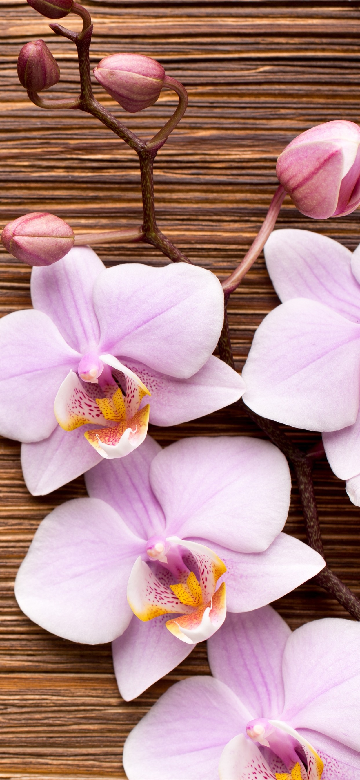 Light Pink Phalaenopsis Flowers Wood Board 1242x2688 Iphone 11 Pro Xs Max Wallpaper Background Picture Image