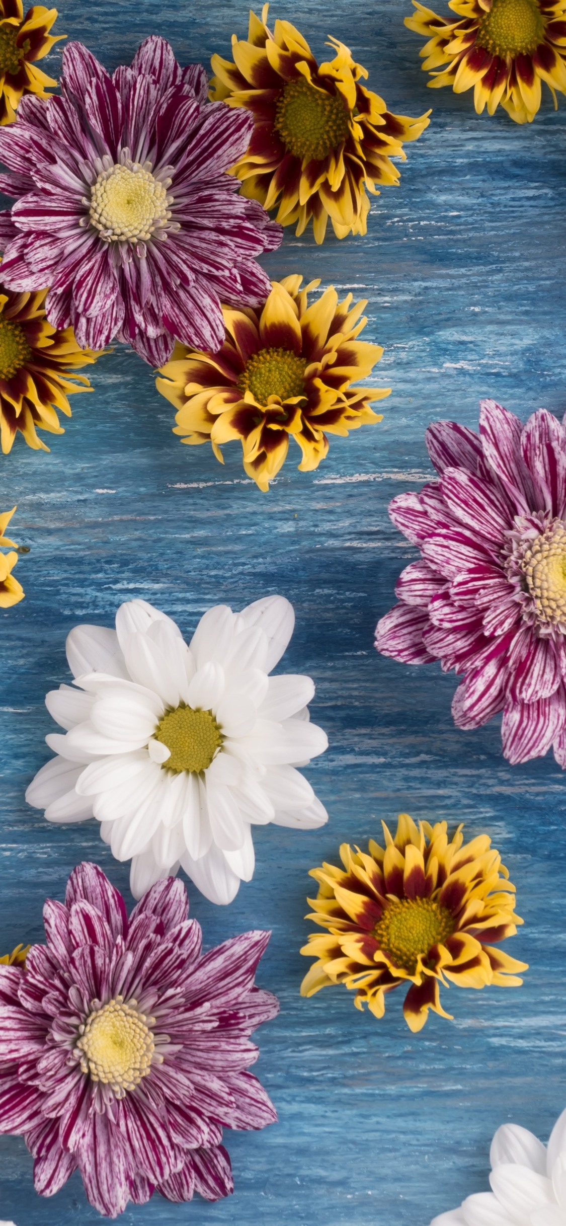 Many Flowers Chrysanthemum Pink White Yellow 1242x2688 Iphone 11 Pro Xs Max Wallpaper Background Picture Image