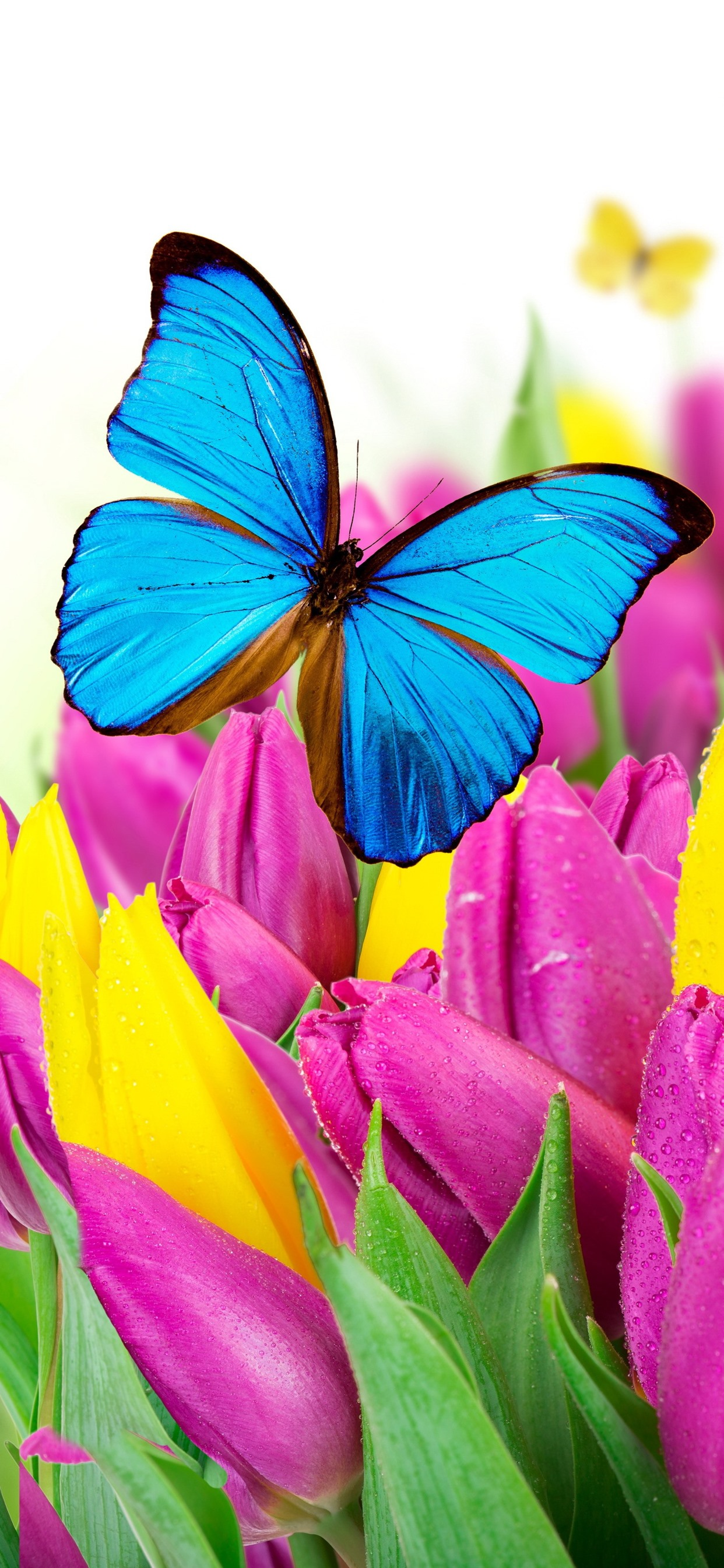 Many Tulips Pink And Yellow Flowers Butterfly 1242x2688 Iphone 11 Pro Xs Max Wallpaper Background Picture Image