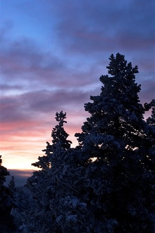 iPhone Wallpaper Moon, trees, snow, winter, dusk