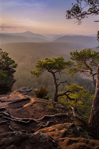 iPhone Wallpaper Mountains, pine trees, sunrise