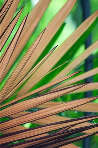 iPhone Wallpaper Palm leaves, stripes