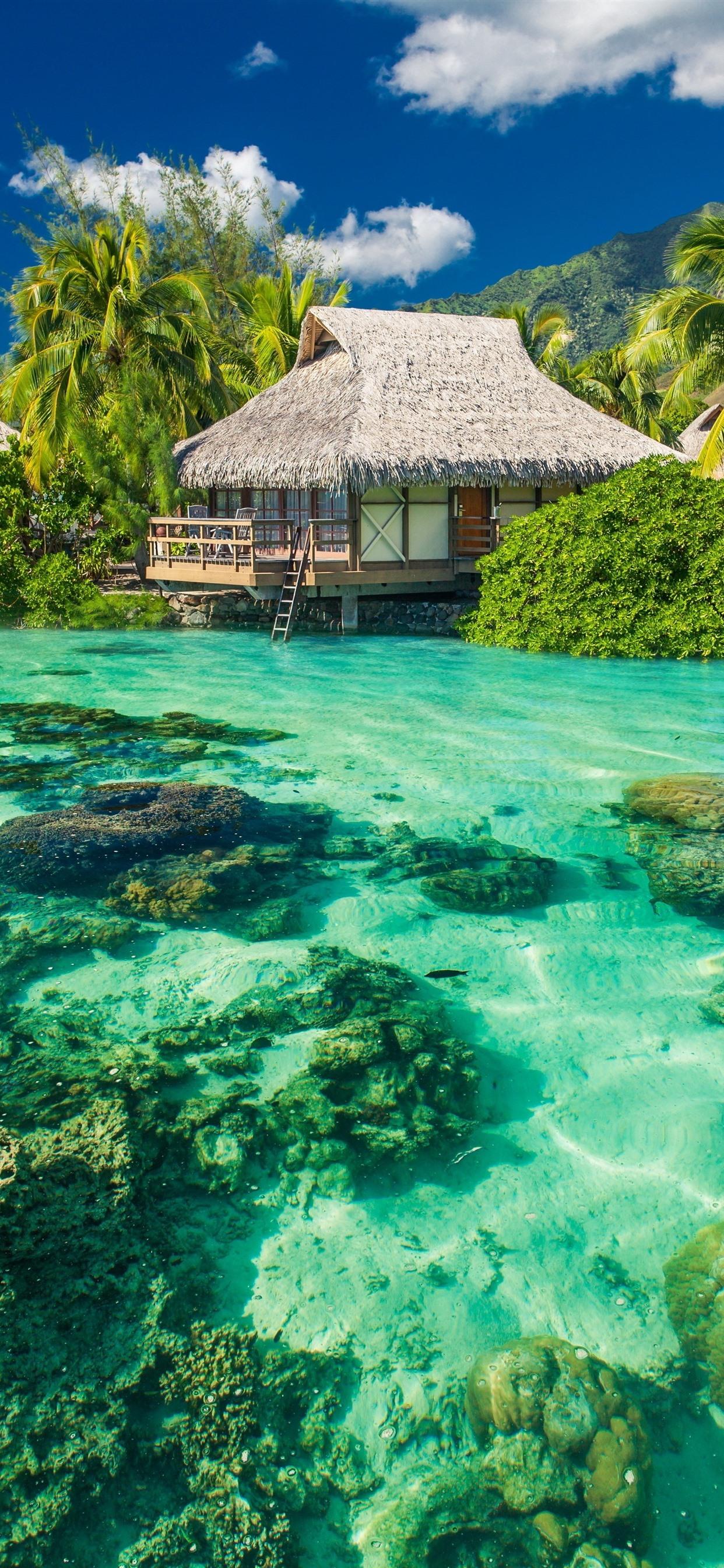 ヤシの木 海 澄んだ水 リゾート トロピカル 1242x26 Iphone 11 Pro Xs Max 壁紙 背景 画像