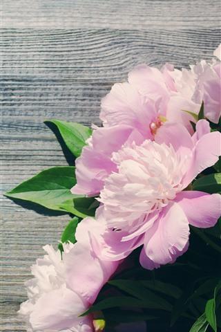 iPhone Wallpaper Pink peonies, flowers