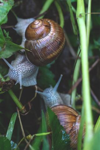 iPhone Wallpaper Snails, plants, wet