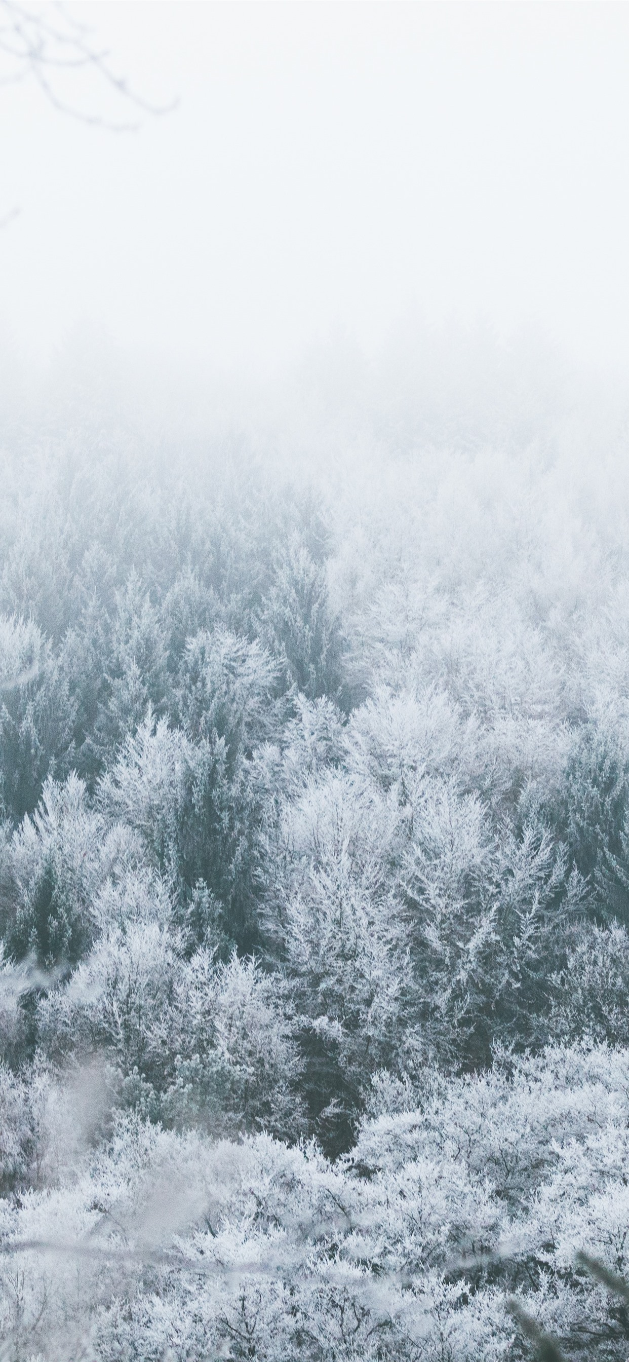 Trees Frost Winter Snow Fog 1242x2688 Iphone 11 Pro Xs Max Wallpaper Background Picture Image