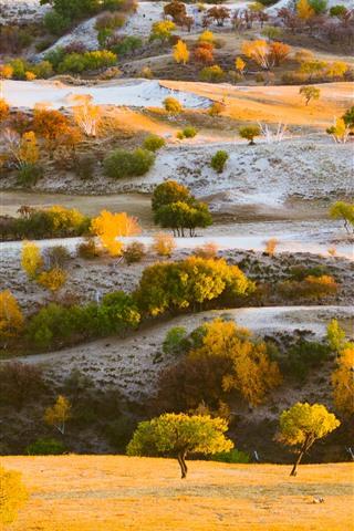 iPhone Wallpaper Trees, grass, hills, autumn, nature