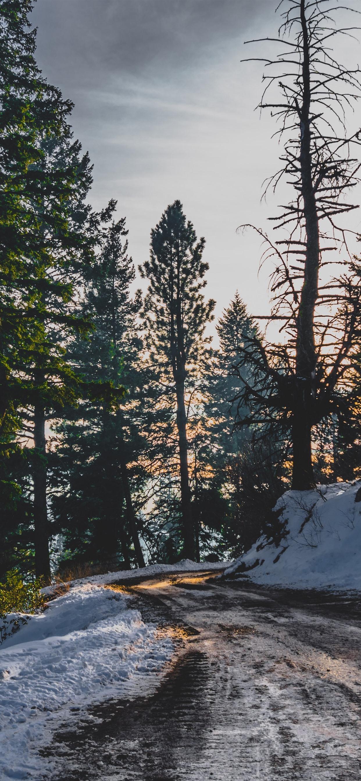 Trees Snow Winter Path Sun Rays 1242x2688 Iphone Xs Max
