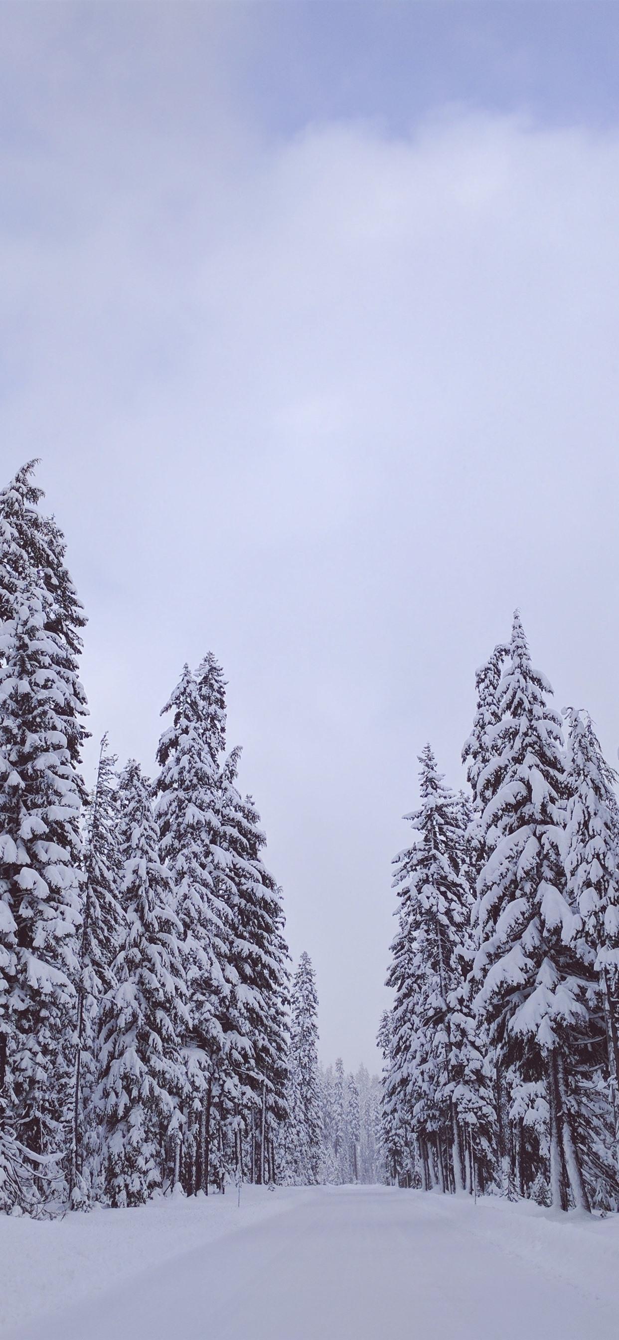 Trees White Snow Winter 1242x2688 Iphone Xs Max Wallpaper