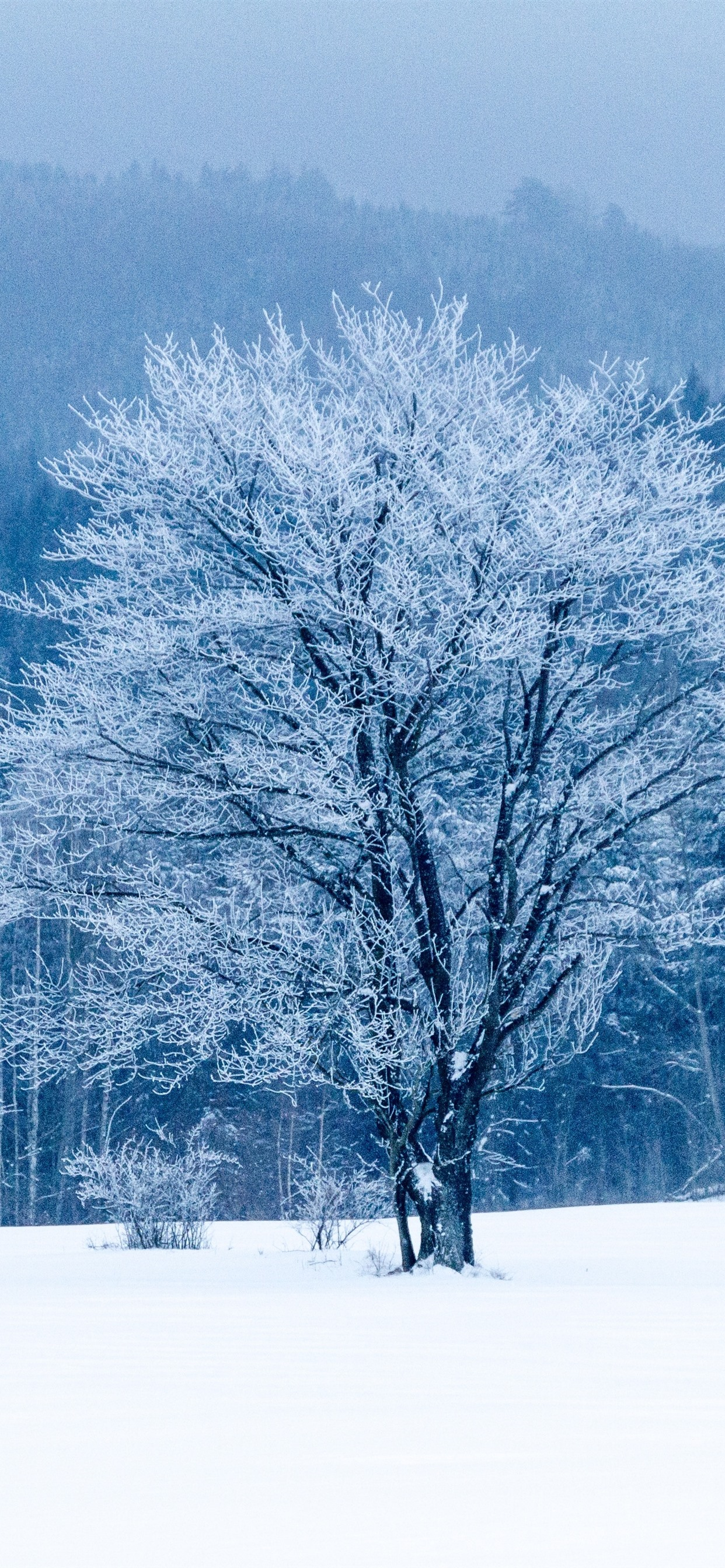 Winter Snow Trees White World 1242x2688 Iphone 11 Pro Xs Max Wallpaper Background Picture Image