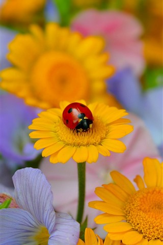 iPhone Wallpaper Yellow flowers, ladybug, insect