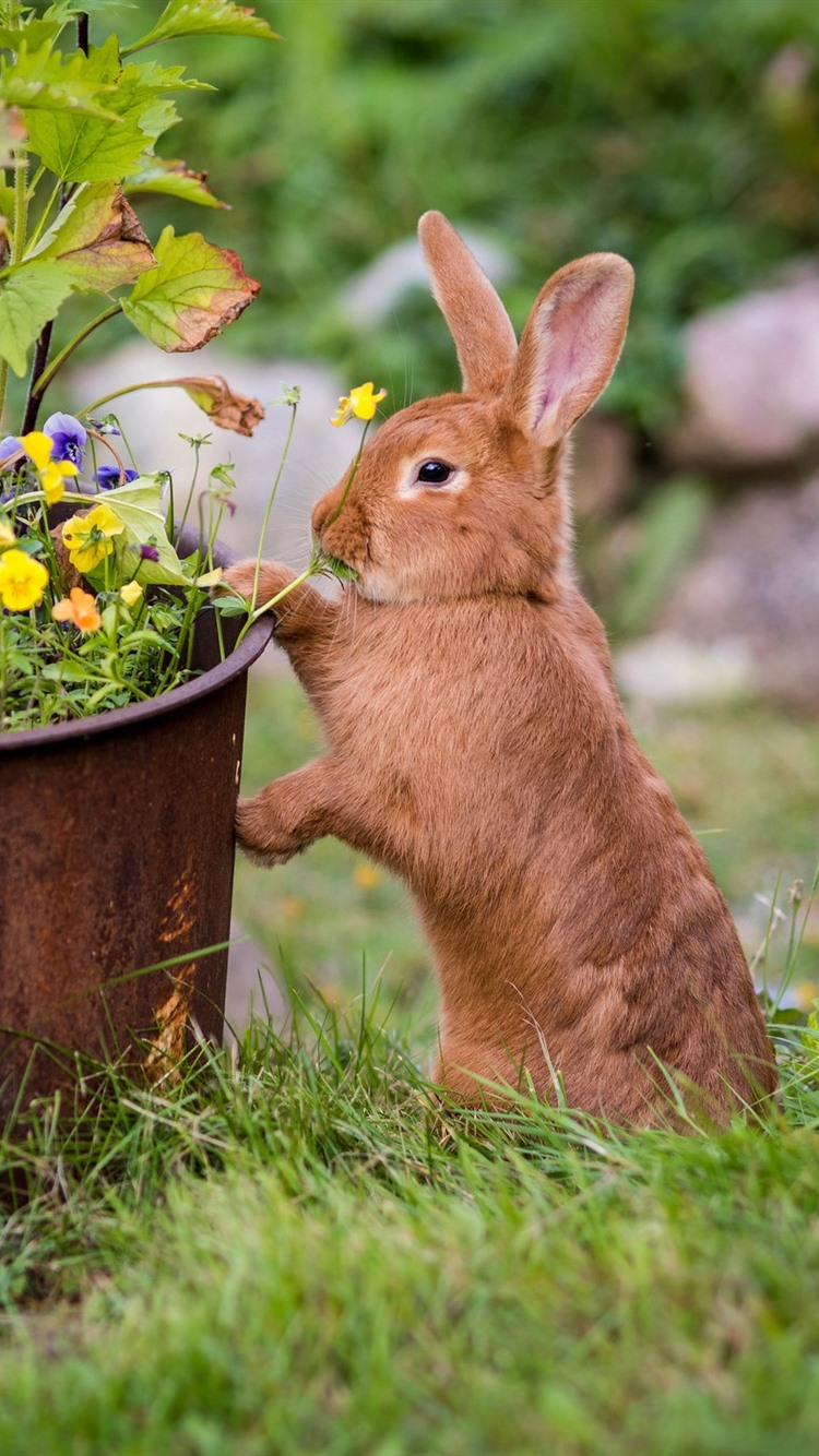 A Brown Rabbit Flowers Meadow 750x1334 Iphone 8 7 6 6s Wallpaper Background Picture Image