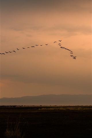 iPhone Fondos de pantalla Un grupo de pájaros volando en el cielo, puesta de sol