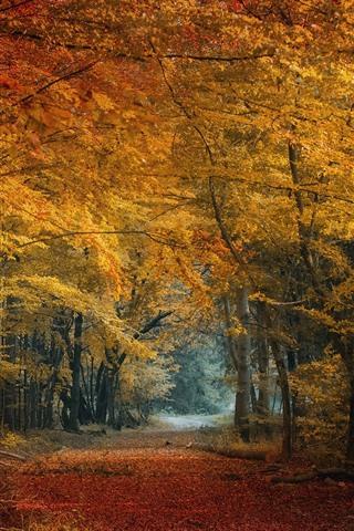 iPhone Fondos de pantalla Otoño, bosque, árboles, hojas amarillas y rojas.