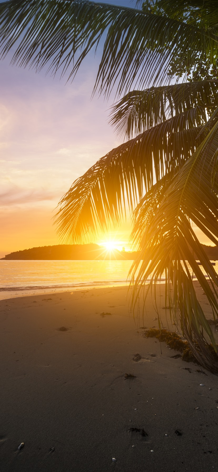 Beach Palm Tree Leaves Sunset Glare 1242x2688 Iphone 11 Pro Xs Max Wallpaper Background Picture Image