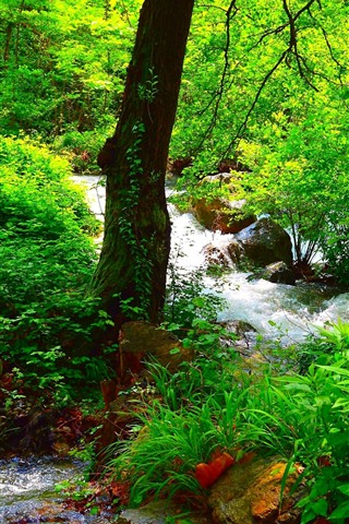 Beautiful Summer Forest Green Trees Rocks Stream 828x1792 Iphone 11 Xr Wallpaper Background Picture Image