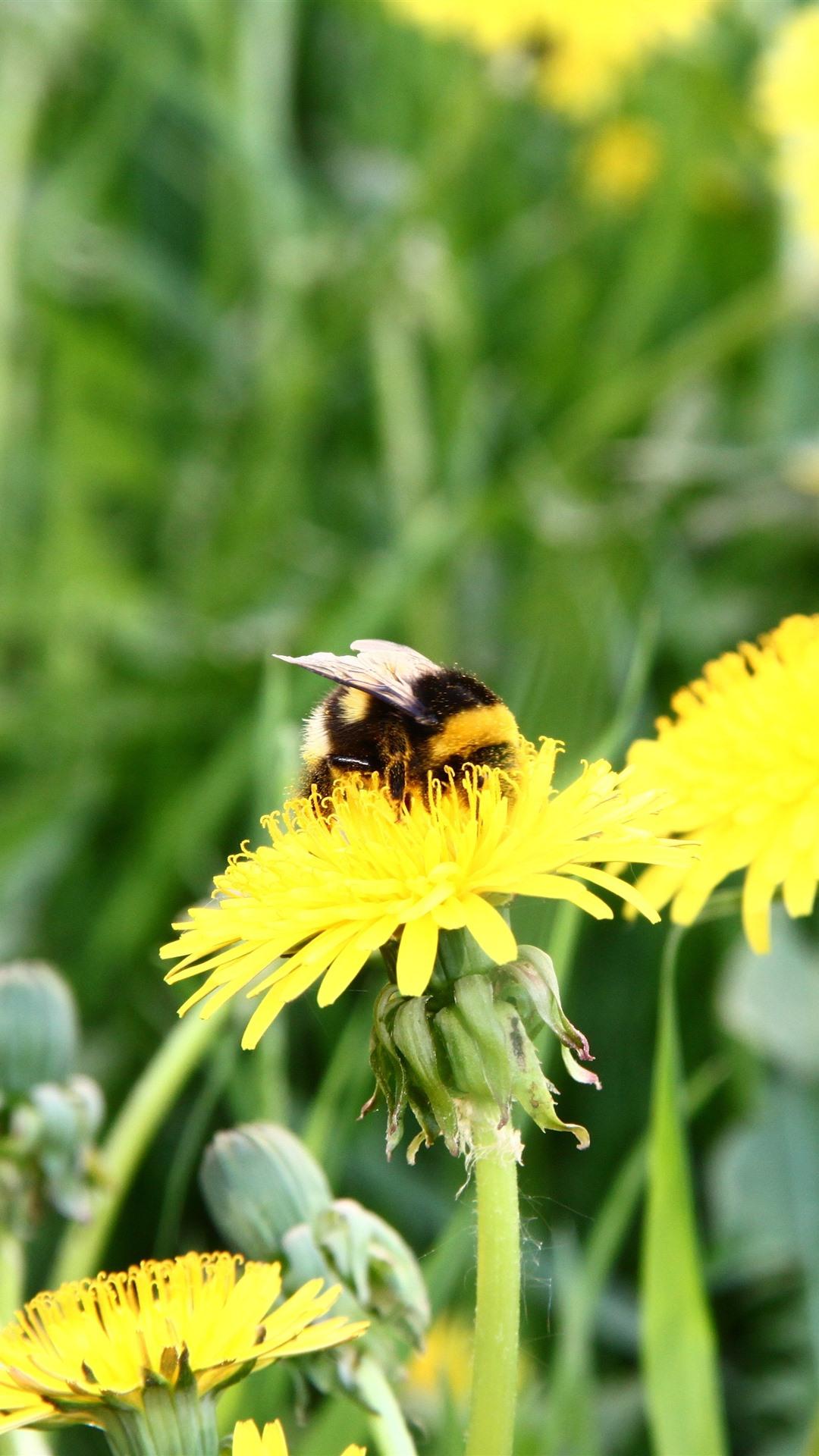 Bee Yellow Dandelion Flowers 1242x2688 Iphone Xs Max
