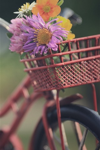 iPhone Fondos de pantalla Bicicleta, cesta, flores