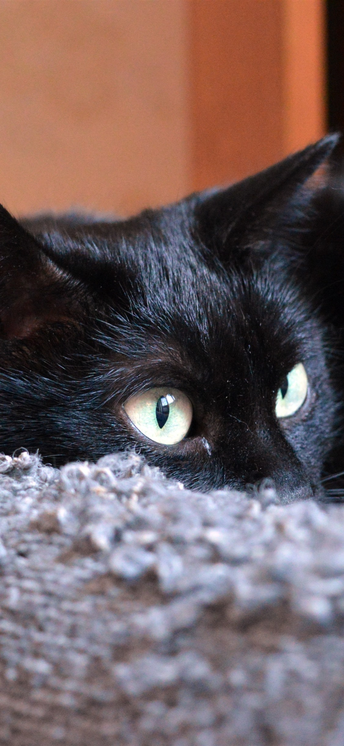 Black Cat Eyes Sofa 1242x2688 Iphone 11 Pro Xs Max Wallpaper Background Picture Image