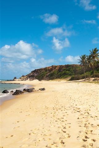 iPhone Wallpaper Brazil, beach, palm trees, sea, coast