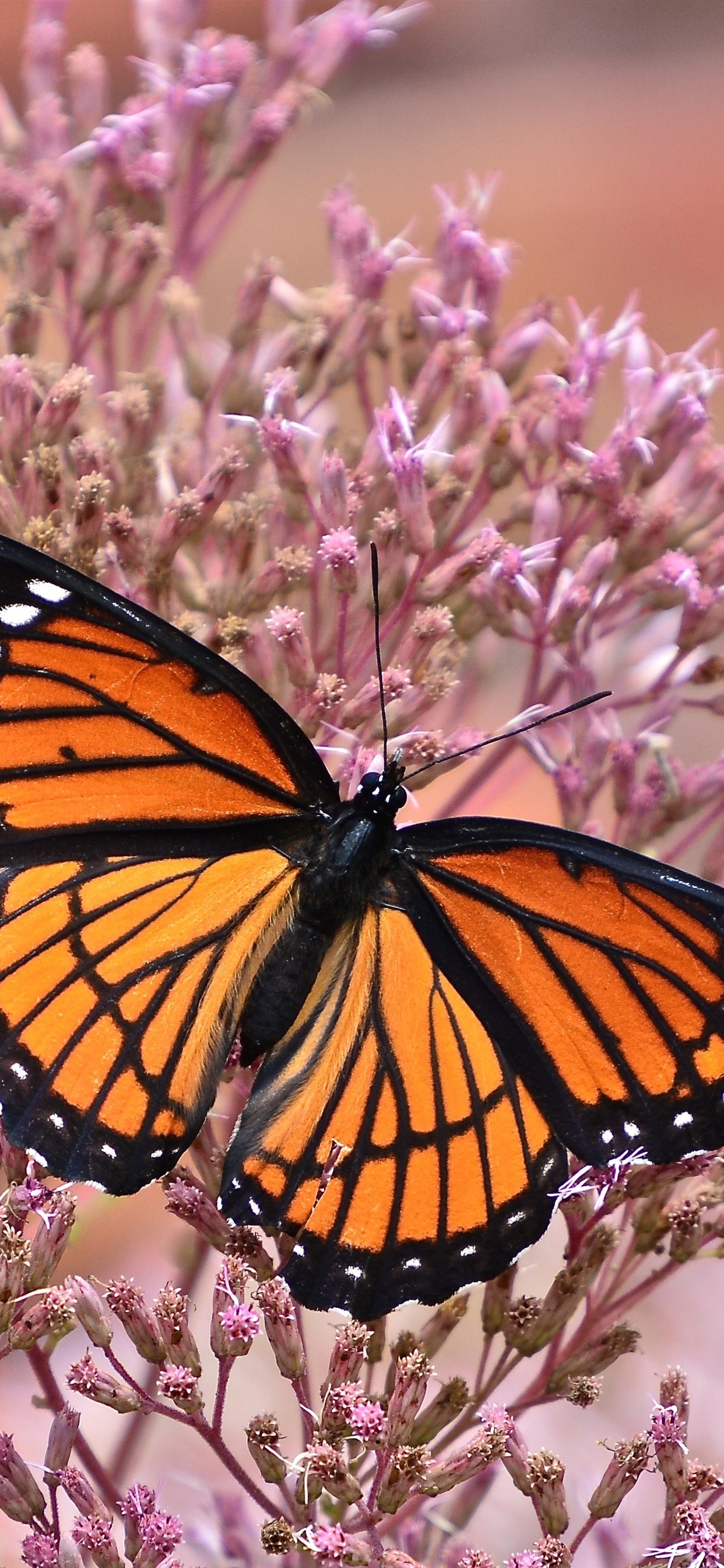Butterfly Wings Pink Little Flowers Insect 1242x2688 Iphone 11 Pro Xs Max Wallpaper Background Picture Image