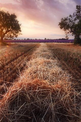 iPhone Wallpaper Fields, lavender, trees, sun rays