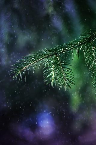 iPhone Fondos de pantalla Ramitas de abeto, agujas, lluvia