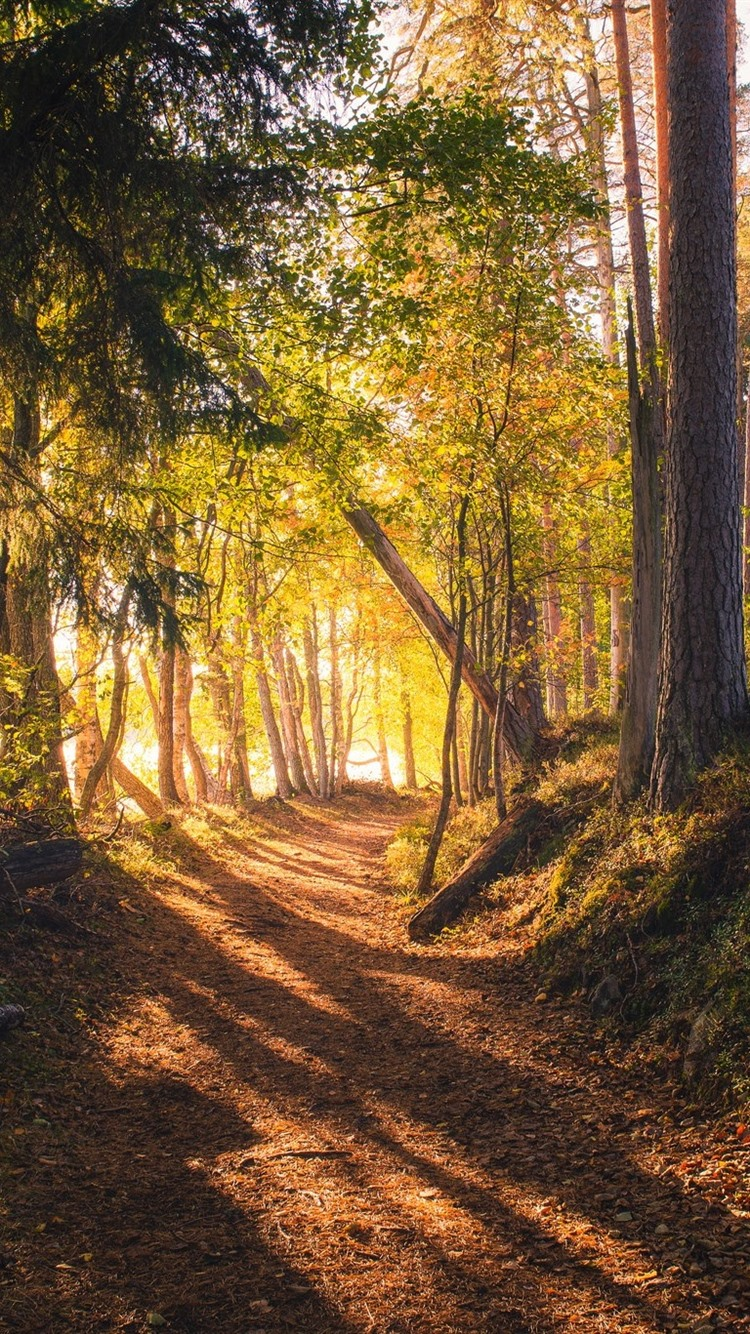 Forest Trees Sun Rays Shadow Path 750x1334 Iphone 8 7 6 6s Wallpaper Background Picture Image