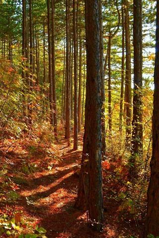 iPhone Fondos de pantalla Bosque, árboles, sol, sombra, otoño