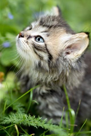 iPhone Fondos de pantalla Mirada de gatito peludo, plantas, fondo verde