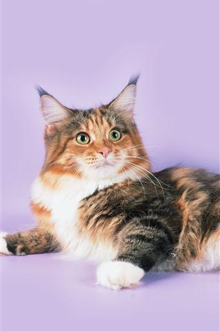 iPhone Wallpaper Furry kitten, pink background