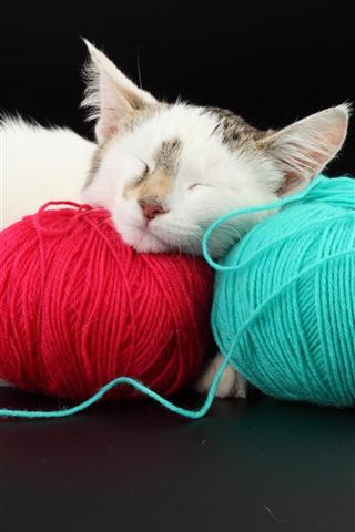 iPhone Wallpaper Furry kitten sleeping, wool thread
