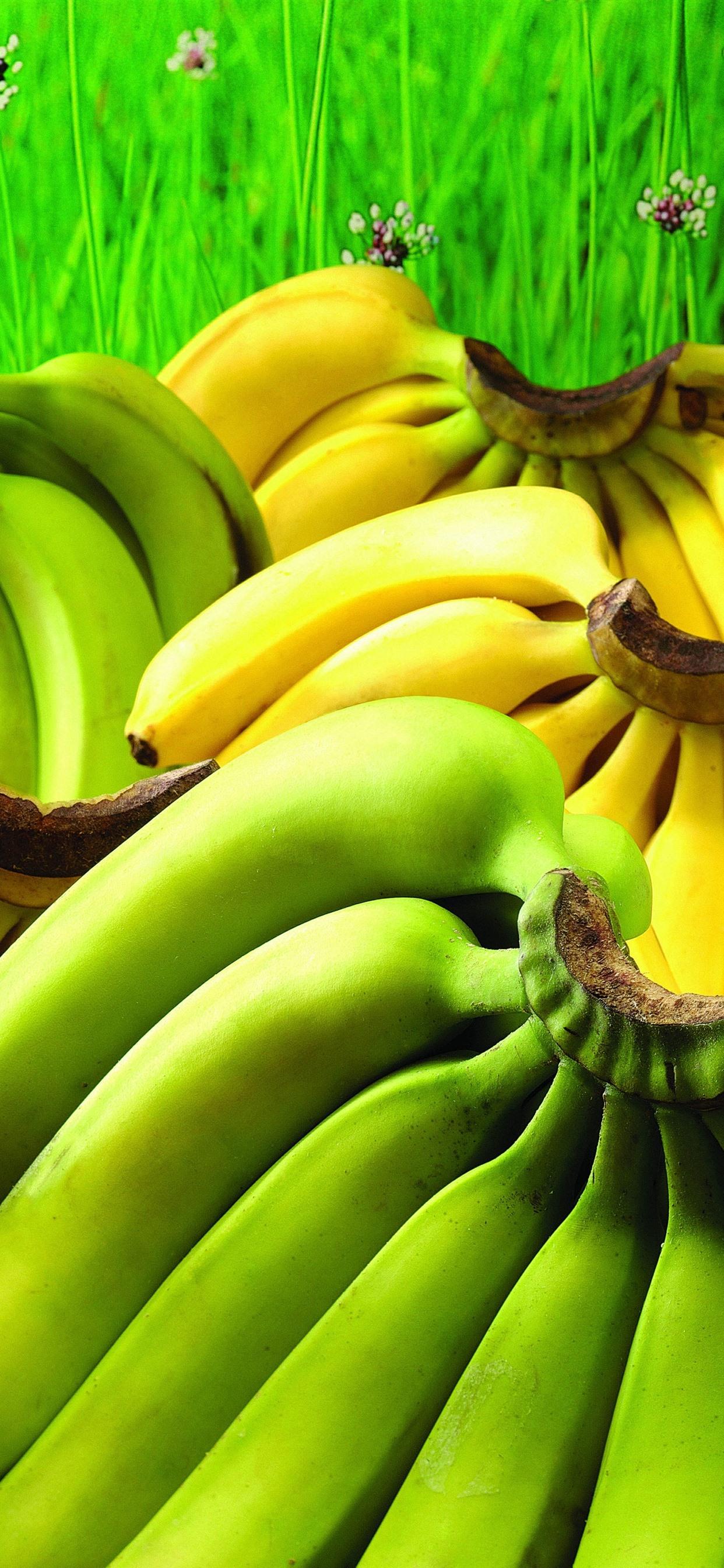 緑色と黄色のバナナ 果物 1242x2688 Iphone 11 Pro Xs Max 壁紙 背景