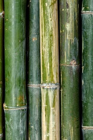 iPhoneの壁紙 緑の竹のテクスチャの背景