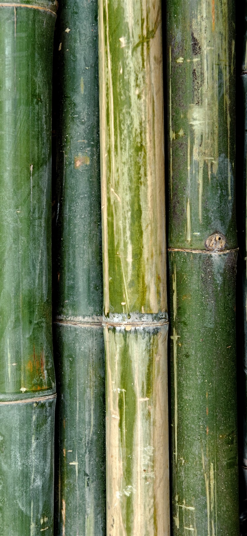 Green Bamboo Texture Background 1242x2688 Iphone Xs Max