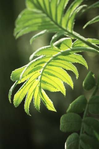 iPhone Wallpaper Green fern leaves, sunshine