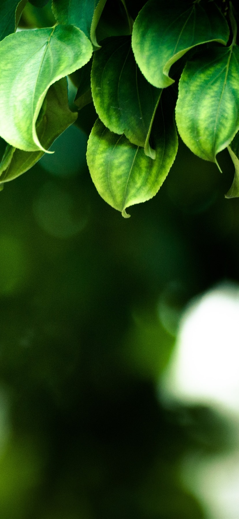Green Leaves Hazy Background Spring 1242x2688 Iphone Xs