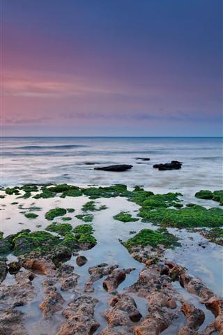 iPhone Fondos de pantalla Musgo verde, arrecifes, mar