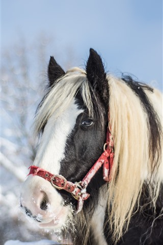 iPhone Wallpaper Horse, head, eyes, mane, snow, winter