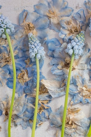iPhone Wallpaper Hyacinth and dry flowers, wall