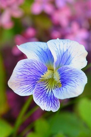 iPhone Fondos de pantalla Iris, pétalos, primavera.