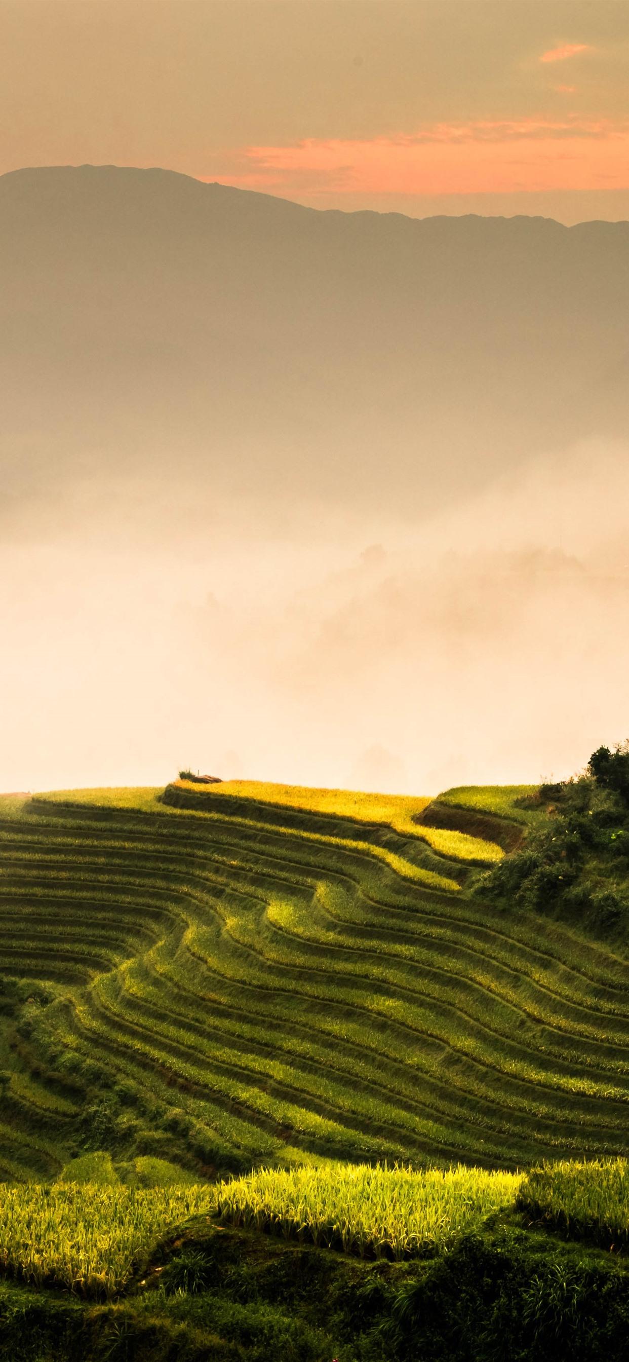 Longji Rice Terraces Morning Fog Mountains Guilin China
